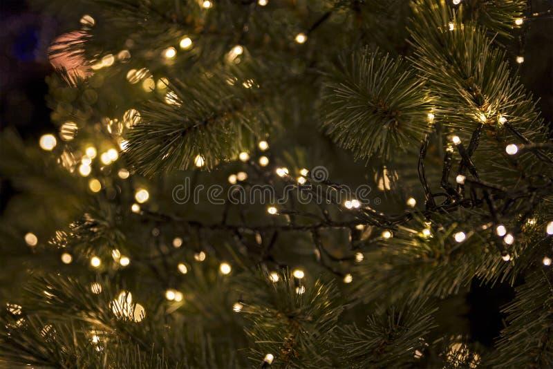 Σύνολο δέντρων πεύκων με τα φω'τα στοκ εικόνες