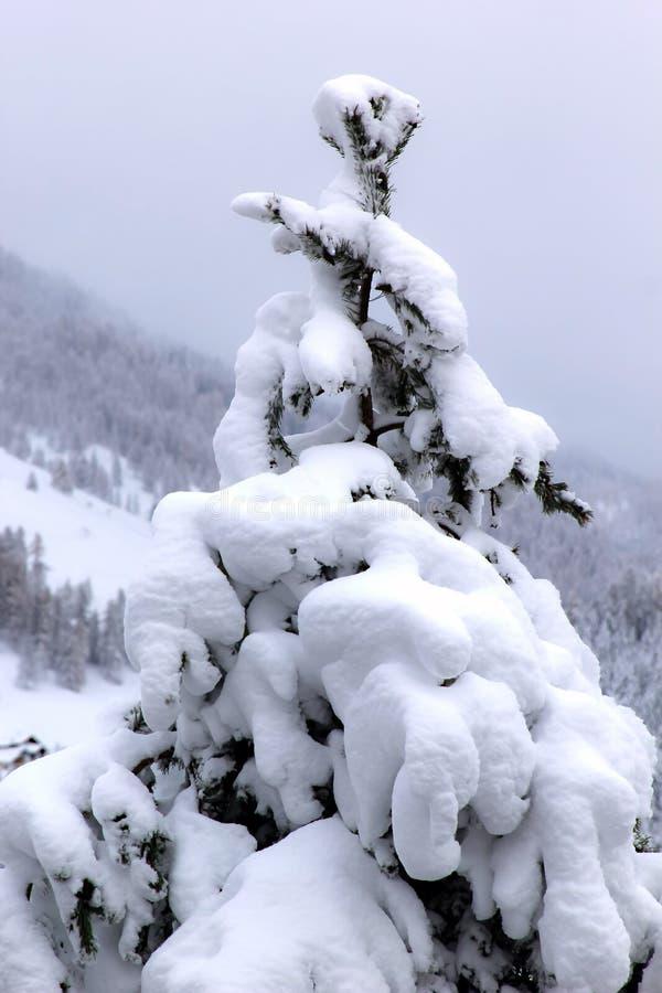Σύνολο δέντρων του χιονιού στη μαγική χειμερινή εποχή στοκ φωτογραφία με δικαίωμα ελεύθερης χρήσης