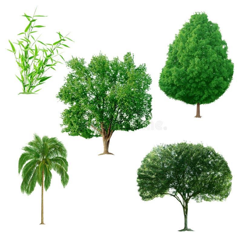 Σύνολο δέντρων στοκ εικόνα με δικαίωμα ελεύθερης χρήσης