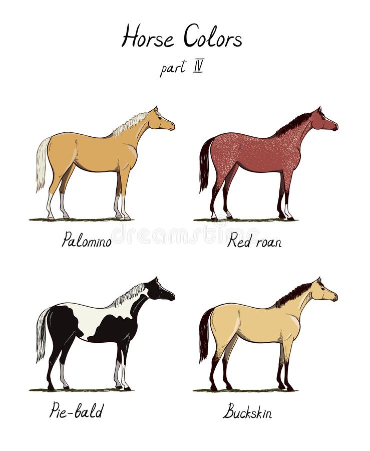 Σύνολο διαγράμματος χρώματος αλόγων στο λευκό Ίππεια χρώματα παλτών με το κείμενο Ιππικό σχέδιο διανυσματική απεικόνιση