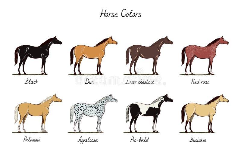 Σύνολο διαγραμμάτων χρώματος αλόγων Ίππεια χρώματα παλτών με το κείμενο Τύποι Μαύρων αλόγων, dun, κάστανο, κόκκινος roan, palomin ελεύθερη απεικόνιση δικαιώματος