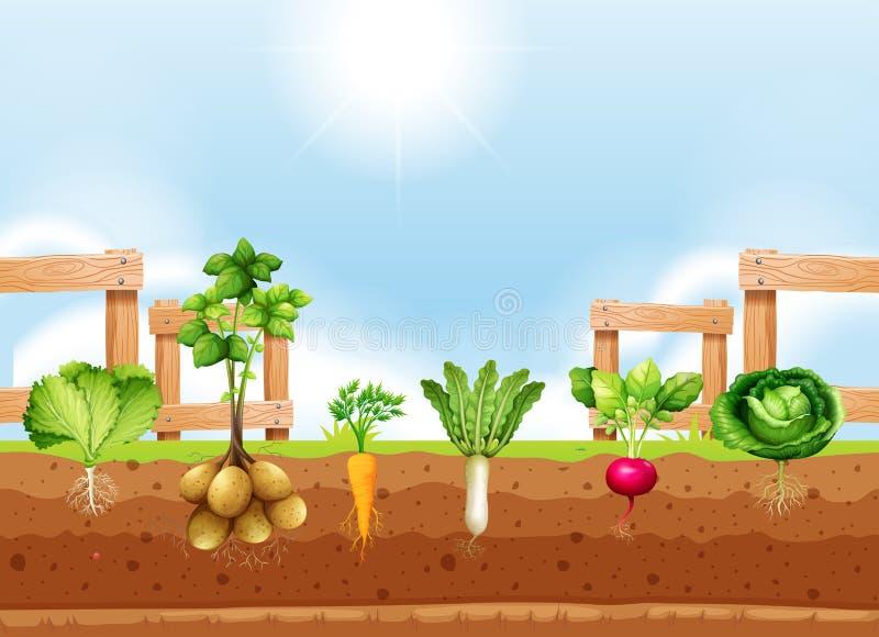 Σύνολο διαφορετικής φυτικής συγκομιδής ελεύθερη απεικόνιση δικαιώματος