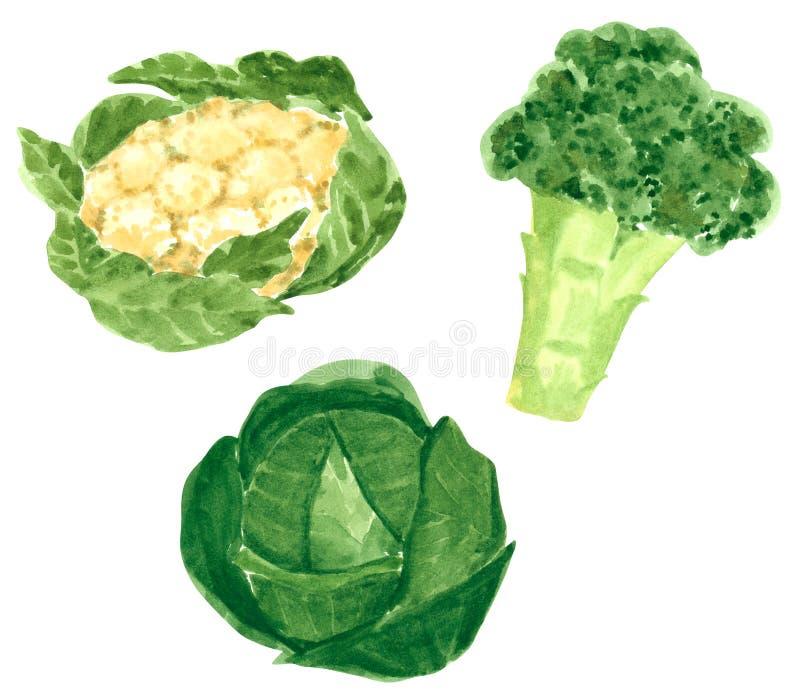 Σύνολο διαφορετικών λαχανικών, συρμένη χέρι απεικόνιση watercolor Μπρόκολο, λάχανο και κουνουπίδι διανυσματική απεικόνιση