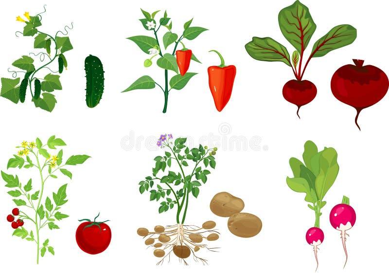 Σύνολο διαφορετικών φυτικών εγκαταστάσεων με τα φρούτα στο άσπρο υπόβαθρο ελεύθερη απεικόνιση δικαιώματος