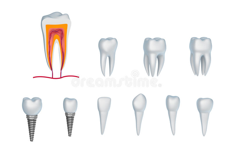 Σύνολο δοντιών και μοσχευμάτων. Απομονωμένος στο λευκό. ελεύθερη απεικόνιση δικαιώματος
