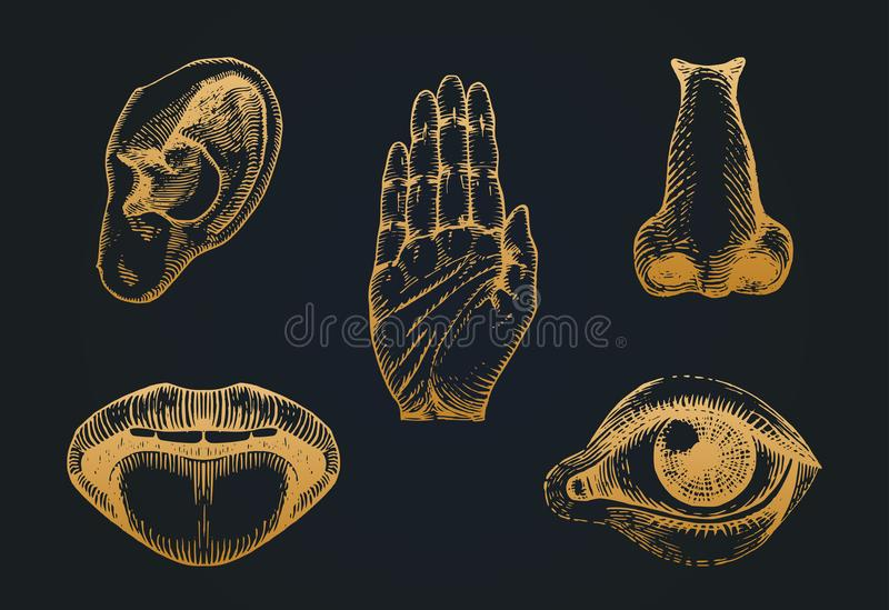 Σύνολο εικονιδίων πέντε ανθρώπινων αισθήσεων στο χαραγμένο ύφος Διανυσματική απεικόνιση των αισθητήριων οργάνων ελεύθερη απεικόνιση δικαιώματος