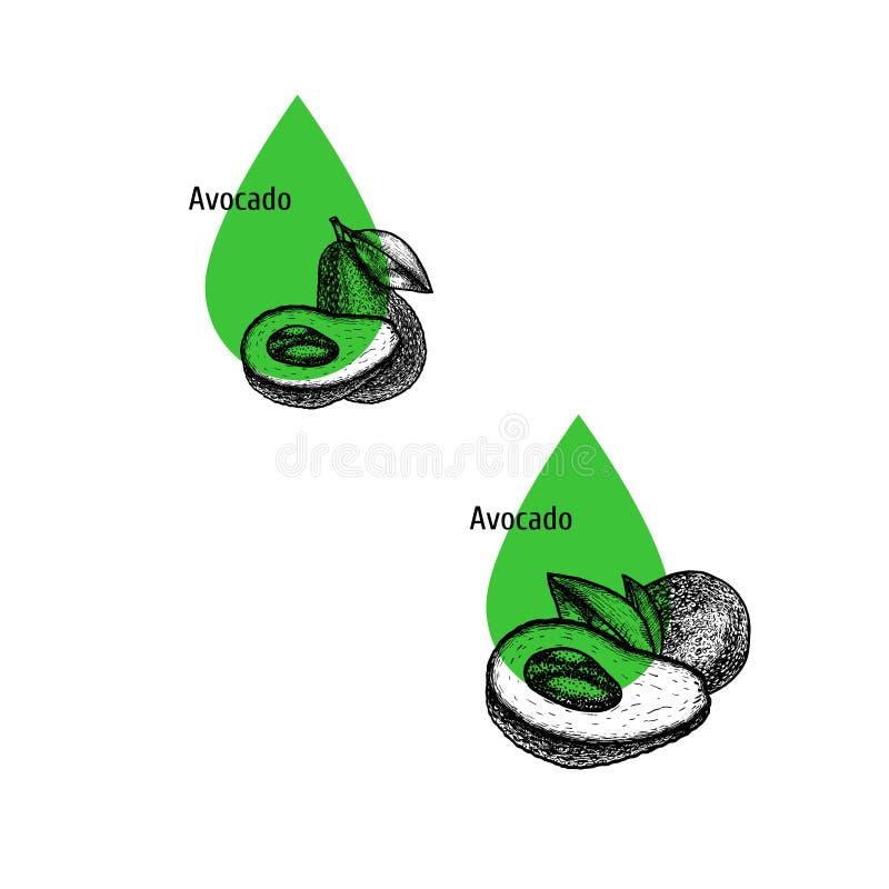 Σύνολο εικονιδίων πετρελαίου αβοκάντο Συρμένο χέρι σκίτσο Εκχύλισμα των εγκαταστάσεων επίσης corel σύρετε το διάνυσμα απεικόνισης ελεύθερη απεικόνιση δικαιώματος