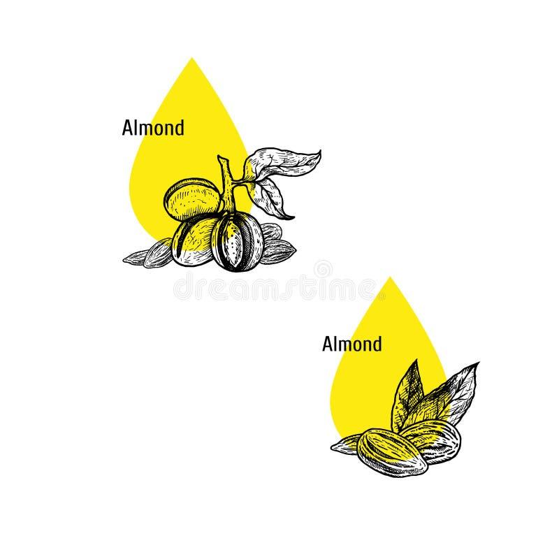 Σύνολο εικονιδίων πετρελαίου αμυγδάλων Συρμένο χέρι σκίτσο Εκχύλισμα των εγκαταστάσεων επίσης corel σύρετε το διάνυσμα απεικόνιση απεικόνιση αποθεμάτων