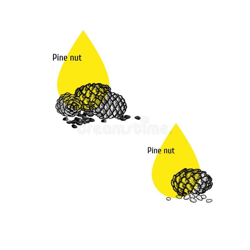 Σύνολο εικονιδίων πετρελαίου καρυδιών πεύκων Συρμένο χέρι σκίτσο Εκχύλισμα των εγκαταστάσεων επίσης corel σύρετε το διάνυσμα απει διανυσματική απεικόνιση
