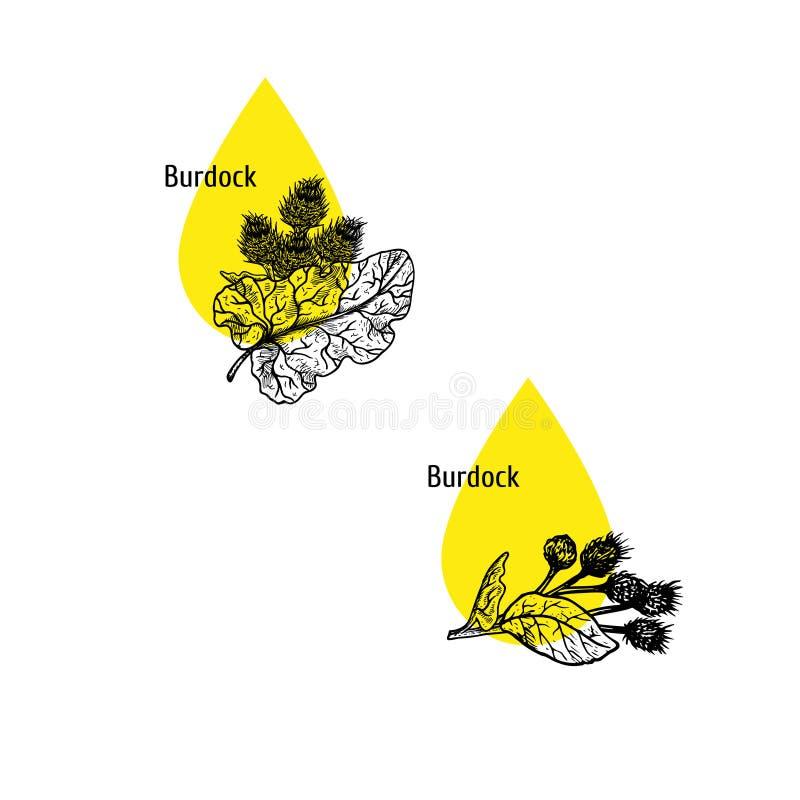 Σύνολο εικονιδίων πετρελαίου Burdock Συρμένο χέρι σκίτσο Εκχύλισμα των εγκαταστάσεων επίσης corel σύρετε το διάνυσμα απεικόνισης διανυσματική απεικόνιση