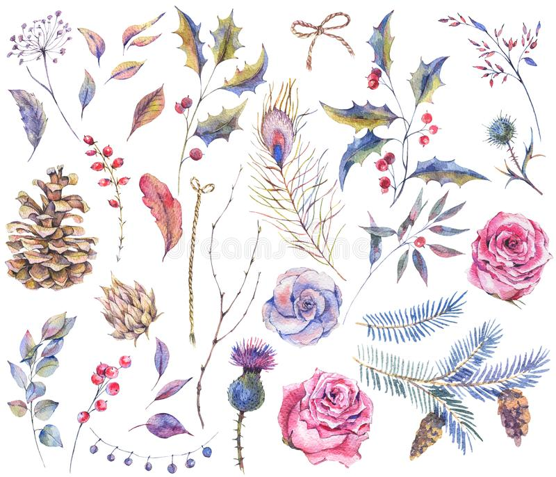Σύνολο εκλεκτής ποιότητας φυσικών στοιχείων watercolor απεικόνιση αποθεμάτων