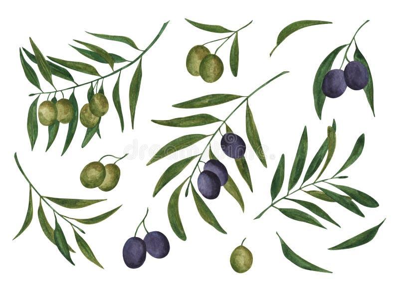 Σύνολο ελιών και κλαδί ελιάς watercolor απεικόνιση αποθεμάτων