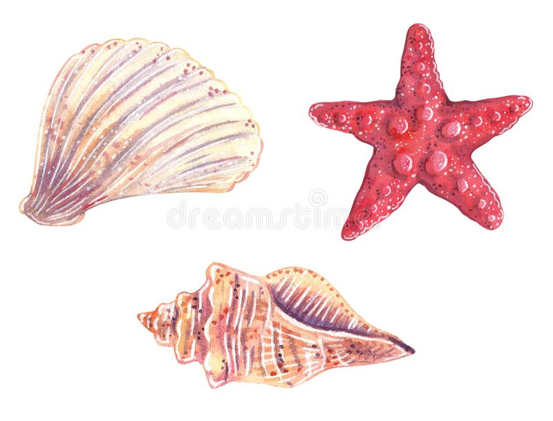 Σύνολο θαλασσινών κοχυλιών και ενός αστερία διανυσματική απεικόνιση
