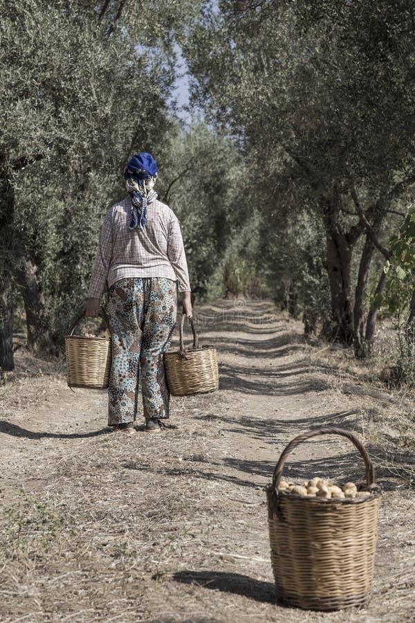 Σύνολο καλαθιών μεταφοράς γυναικών της Farmer με τα φρούτα στοκ φωτογραφίες
