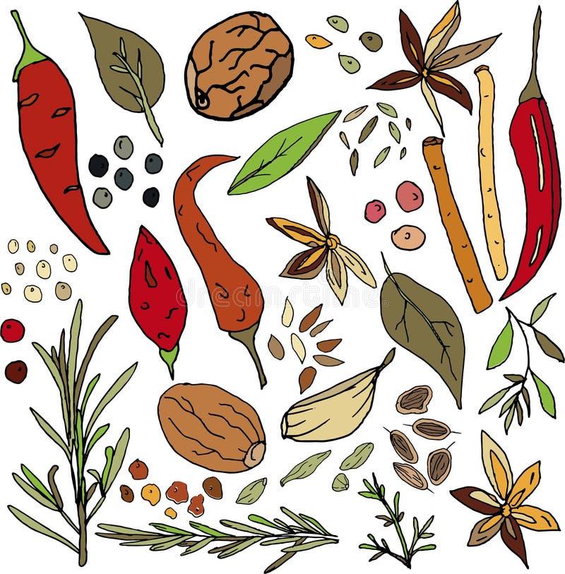 Σύνολο καρυκευμάτων Πιπέρια τσίλι, μαύρα και ρόδινα μπιζέλια, φύλλα κόλπων, βασιλικός, μοσχοκάρυδο, θυμάρι, δεντρολίβανο, καρδάμω διανυσματική απεικόνιση