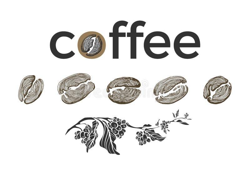 Σύνολο κλάδου καφέ, φασόλια στο άσπρο υπόβαθρο Διανυσματική συλλογή σκίτσο ελεύθερη απεικόνιση δικαιώματος