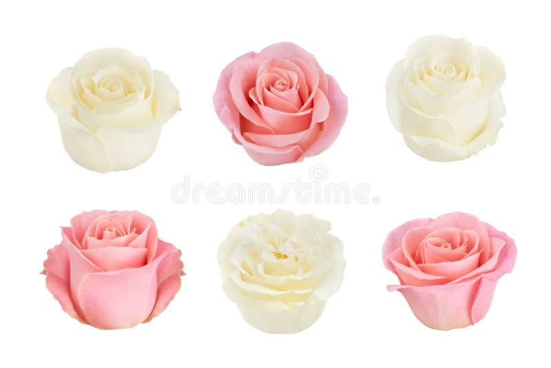 Σύνολο με τα ρόδινα και άσπρα τριαντάφυλλα Σαν στοιχεία σχεδίου στοκ φωτογραφίες
