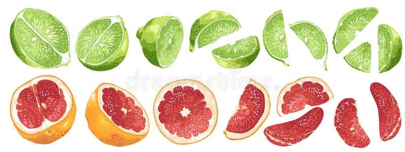 Σύνολο με τους καρπούς και τα μέρη φρούτων του γκρέιπφρουτ και του ασβέστη στο διανυσματικό ρεαλιστικό γραφικό illsutration διανυσματική απεικόνιση
