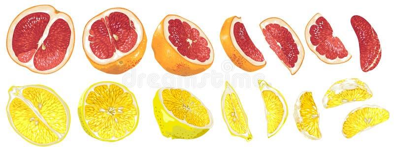 Σύνολο με τους καρπούς και τα μέρη φρούτων του γκρέιπφρουτ και του λεμονιού στο διανυσματικό ρεαλιστικό γραφικό illsutration ελεύθερη απεικόνιση δικαιώματος