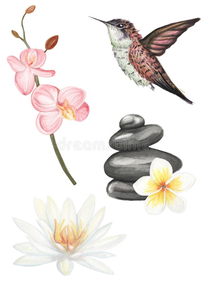 Σύνολο ορχιδέας, λωτού και βουίζοντας χεριού πουλιών που σύρονται απεικόνιση αποθεμάτων