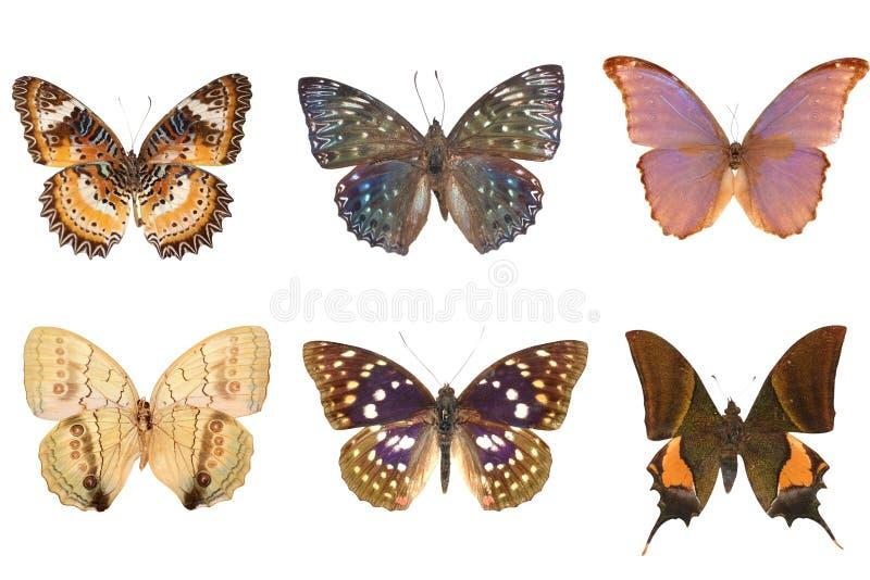 σύνολο πεταλούδων στοκ φωτογραφία