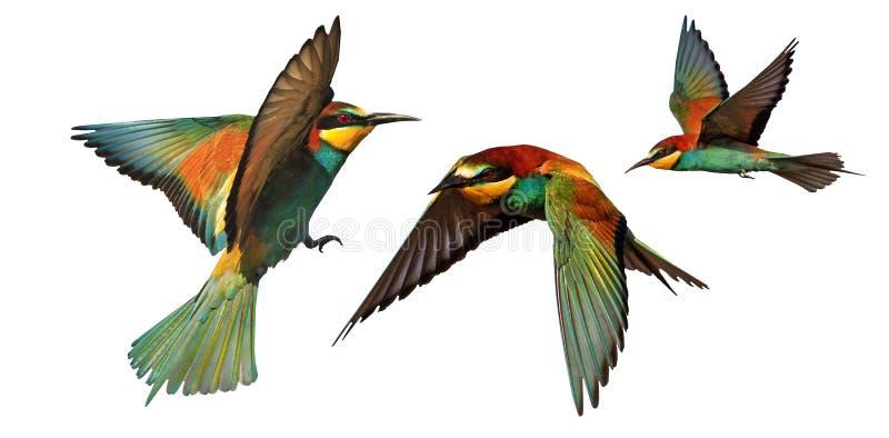 Σύνολο πουλιών χρώματος που απομονώνεται κατά την πτήση σε ένα άσπρο υπόβαθρο στοκ εικόνες