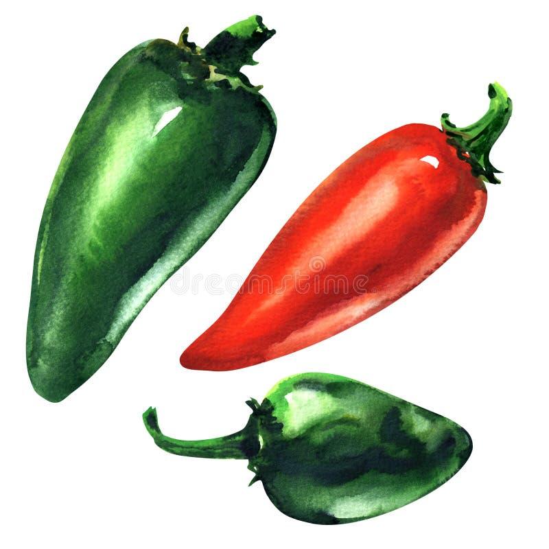 Σύνολο πράσινου, κόκκινο - καυτά πιπέρια τσίλι, πιπέρι Jalapeno, που απομονώνεται, συρμένη χέρι απεικόνιση watercolor στο λευκό απεικόνιση αποθεμάτων