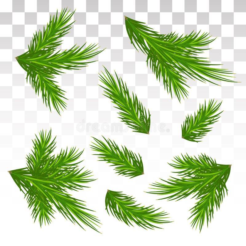 Σύνολο πράσινων κλάδων πεύκων απομονωμένος Χριστούγεννα ντεκόρ Το Chri διανυσματική απεικόνιση