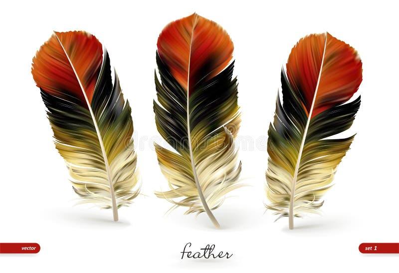 Σύνολο ρεαλιστικών φτερών - απεικόνιση η ανασκόπηση απομόνωσε το λευκό απεικόνιση αποθεμάτων