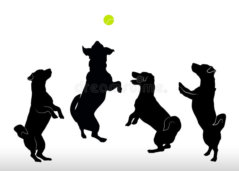 Σύνολο σκιαγραφιών τεριέ του Jack Russell τεσσάρων μικρού ευτυχούς σκυλιών που στέκεται στα οπίσθια πόδια, jumpimg παίζοντας με τ απεικόνιση αποθεμάτων