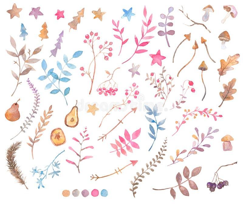 Σύνολο στοιχείων watercolor desugn - floral, ξηρά χορτάρια, φρούτα, μούρα και μανιτάρια απεικόνιση αποθεμάτων