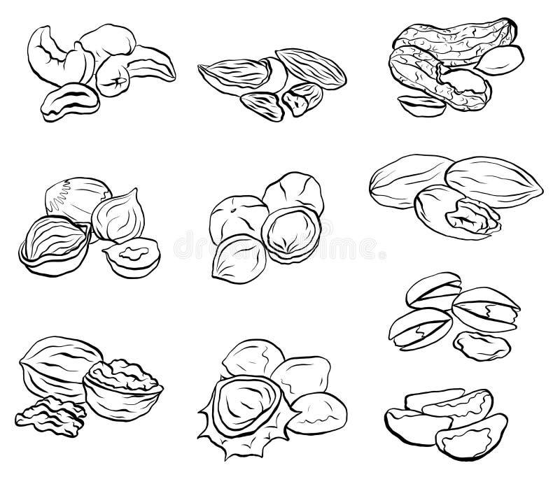 Σύνολο σχεδίων περιγράμματος των διάφορων τύπων καρυδιών Αντικείμενα χωριστά από το υπόβαθρο ελεύθερη απεικόνιση δικαιώματος