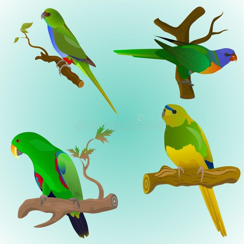 Σύνολο τεσσάρων ζωηρόχρωμων παπαγάλων διανυσματική απεικόνιση