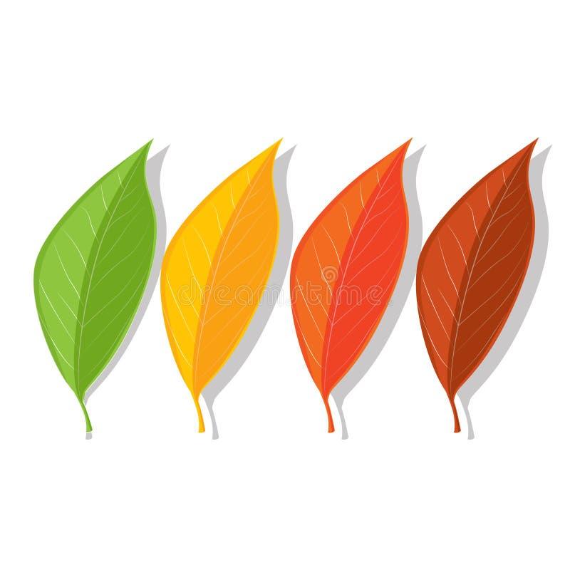 Σύνολο τεσσάρων φύλλων καλοκαιριού και φθινοπώρου Πράσινος, κίτρινος, πορτοκαλής και κόκκινος απεικόνιση αποθεμάτων