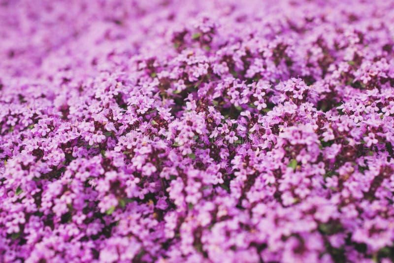 Σύνολο του ροζ στοκ φωτογραφίες με δικαίωμα ελεύθερης χρήσης