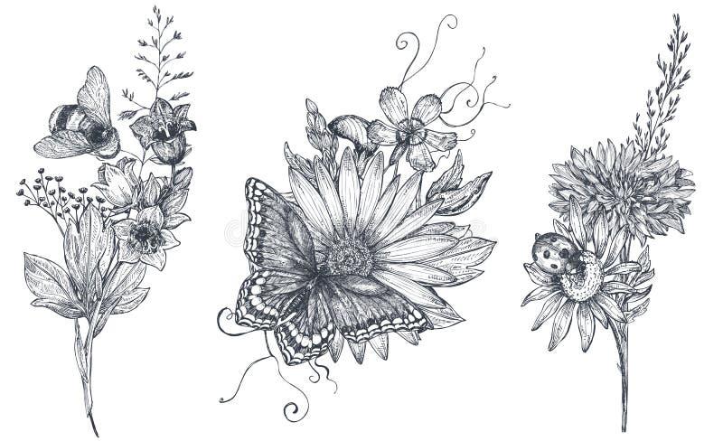 Σύνολο τριών διανυσματικών floral ανθοδεσμών με τα γραπτά συρμένα χέρι χορτάρια, τα wildflowers και τα έντομα απεικόνιση αποθεμάτων