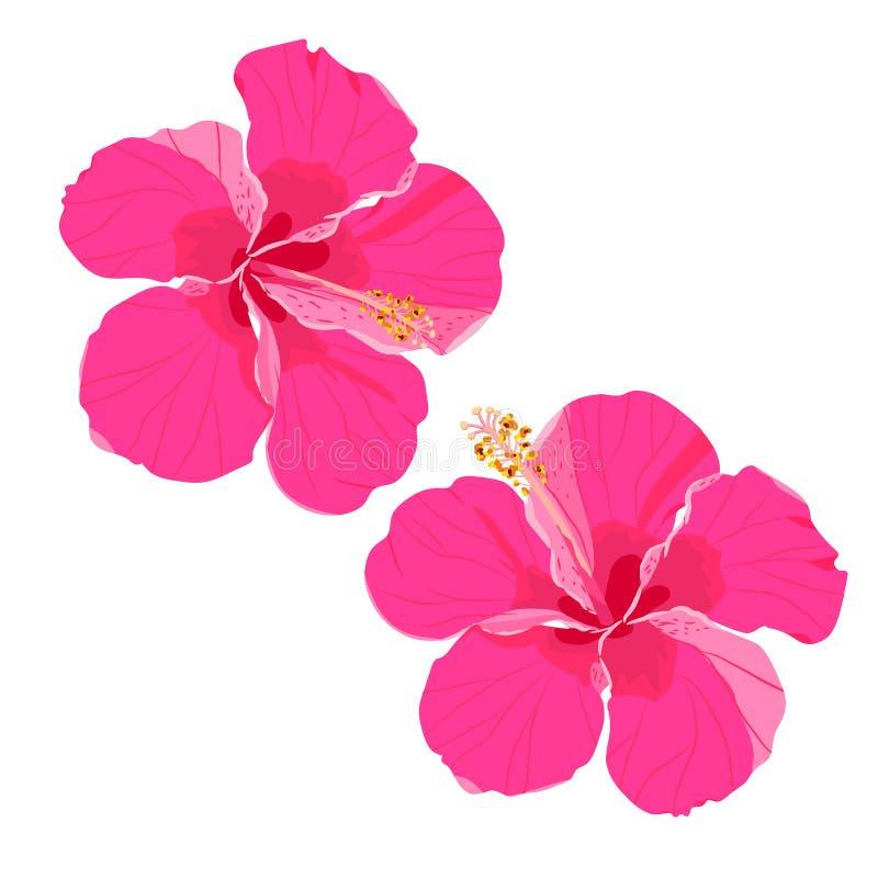 Σύνολο τροπικών στοιχείων λουλουδιών Συλλογή hibiscus των λουλουδιών σε ένα άσπρο υπόβαθρο Διανυσματική δέσμη απεικόνισης απεικόνιση αποθεμάτων