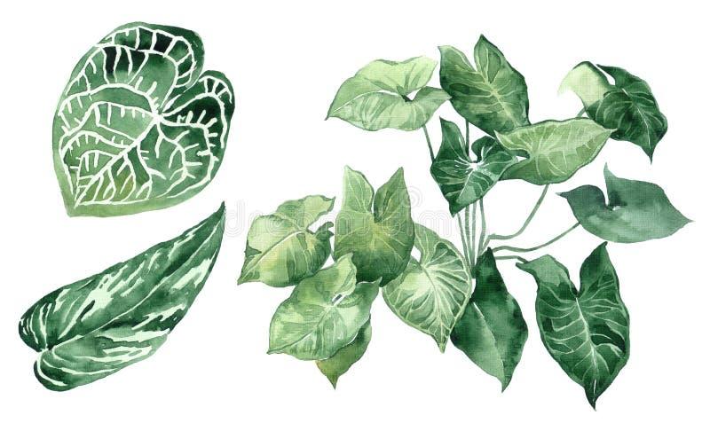 Σύνολο τροπικών φύλλων Ζούγκλα, βοτανικές απεικονίσεις watercolor, floral στοιχεία, φύλλα φοινικών, φτέρη και άλλες απεικόνιση αποθεμάτων