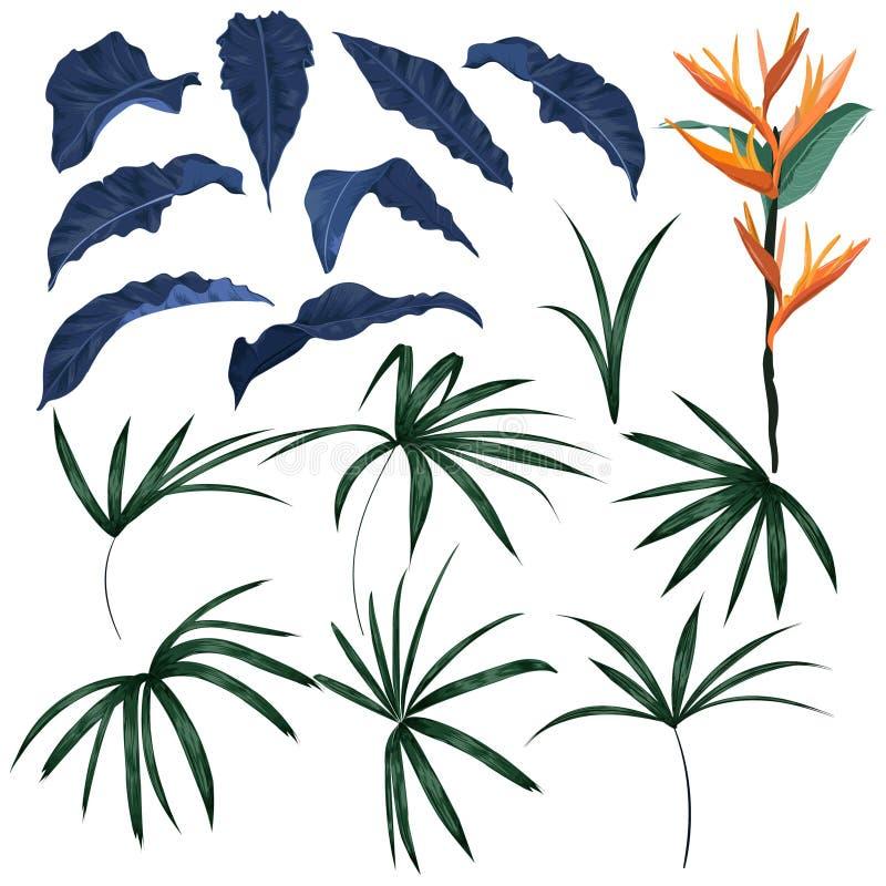 Σύνολο τροπικών φύλλων και εξωτικού διανύσματος φυτών διανυσματική απεικόνιση