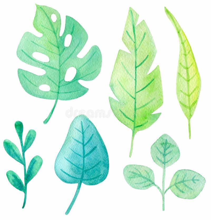 Σύνολο τροπικών φύλλων watercolor απεικόνιση αποθεμάτων