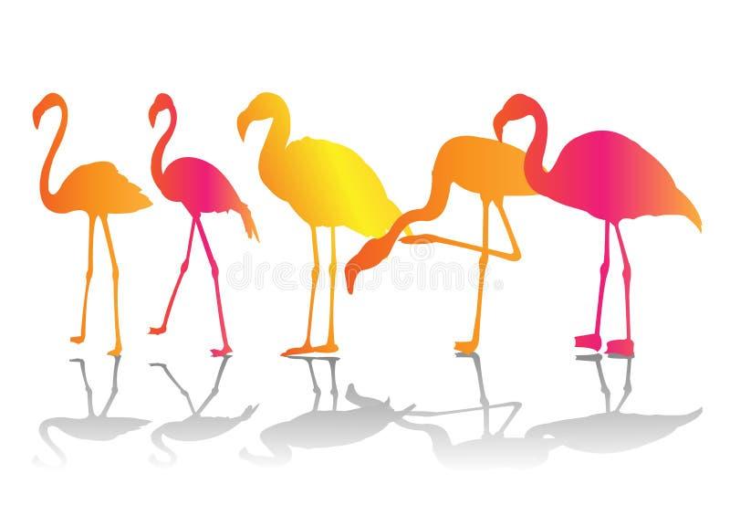 σύνολο φλαμίγκο χρώματο&sigma ελεύθερη απεικόνιση δικαιώματος