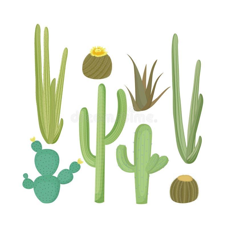 Σύνολο φυτών κάκτων Ανθίζοντας διανυσματική απεικόνιση κάκτων ελεύθερη απεικόνιση δικαιώματος