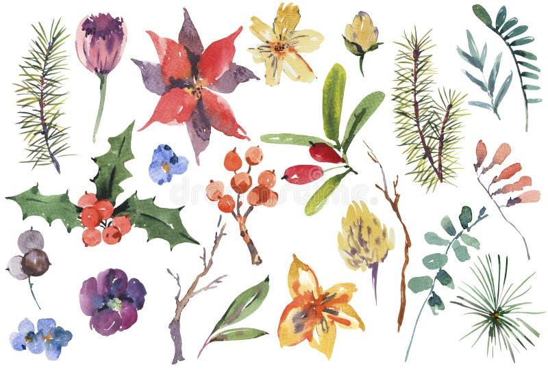 Σύνολο χειμερινού floral watercolor στοιχείων σχεδίου Χριστουγέννων ελεύθερη απεικόνιση δικαιώματος