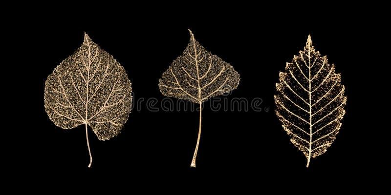 Σύνολο χρυσών φύλλων σκελετών στο μαύρο υπόβαθρο στοκ φωτογραφίες