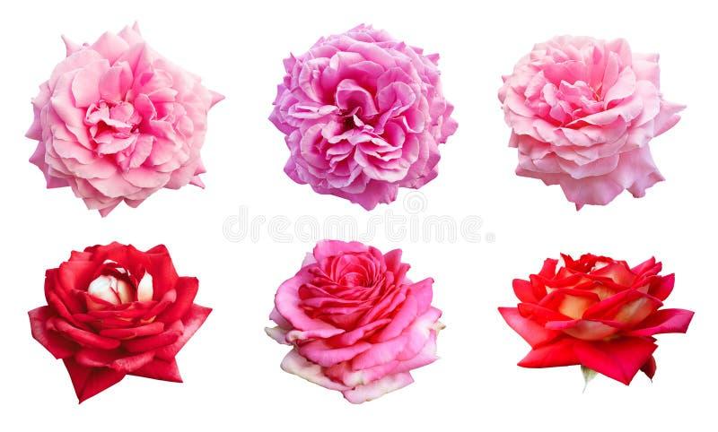 Σύνολο όμορφων ανθίζοντας κόκκινων και ρόδινων τριαντάφυλλων για την ημέρα της μητέρας στοκ εικόνα με δικαίωμα ελεύθερης χρήσης