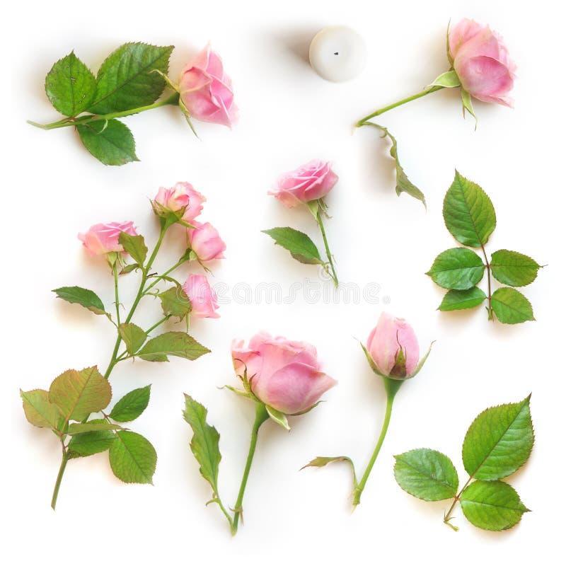 Σύνολο όμορφων ρόδινων τριαντάφυλλων που απομονώνεται με τη σκιά σε ένα άσπρο υπόβαθρο στοκ φωτογραφίες με δικαίωμα ελεύθερης χρήσης