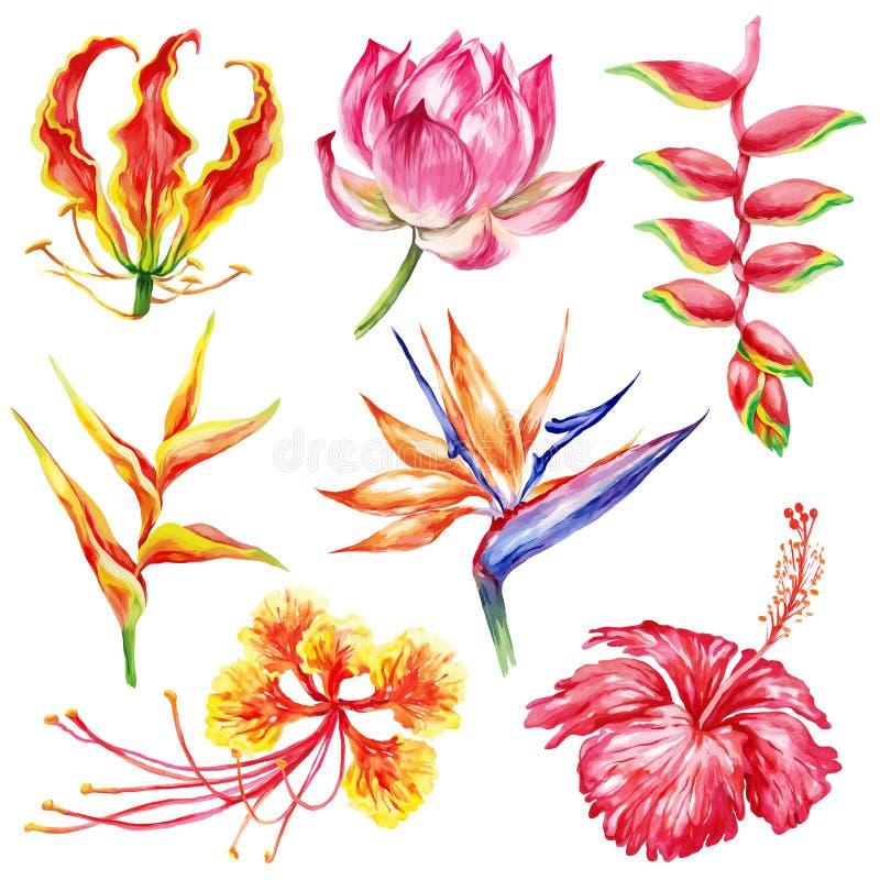Σύνολο ύφους Watercolor εξωτικών λουλουδιών Βοτανική φωτεινή συλλογή φύσης που απομονώνεται στο άσπρο υπόβαθρο ελεύθερη απεικόνιση δικαιώματος
