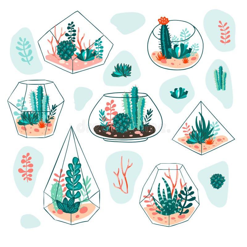 Σύνολο succulents και κάκτου με τα terrariums floral διάνυσμα σχεδίου διανυσματική απεικόνιση