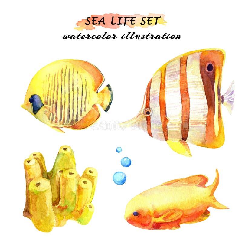 Σύνολο Watercolor τροπικών ψαριών και κοραλλιού διανυσματική απεικόνιση