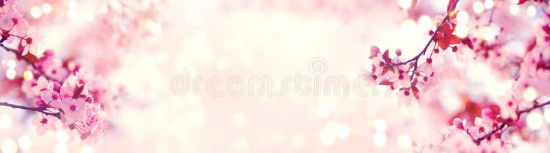 Σύνορα άνοιξη ή τέχνη υποβάθρου με το ρόδινο άνθος Όμορφη σκηνή φύσης με το ανθίζοντας δέντρο στοκ εικόνες
